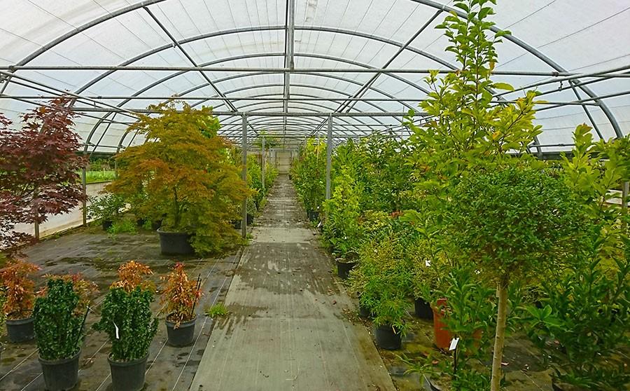 vente de plantes à Plélo| Pépinières Corbel et Paysages