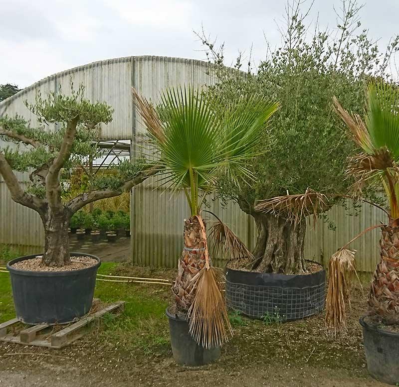 plantes locales ou de plantes exotiques à Plélo| Pépinières Corbel et Paysages