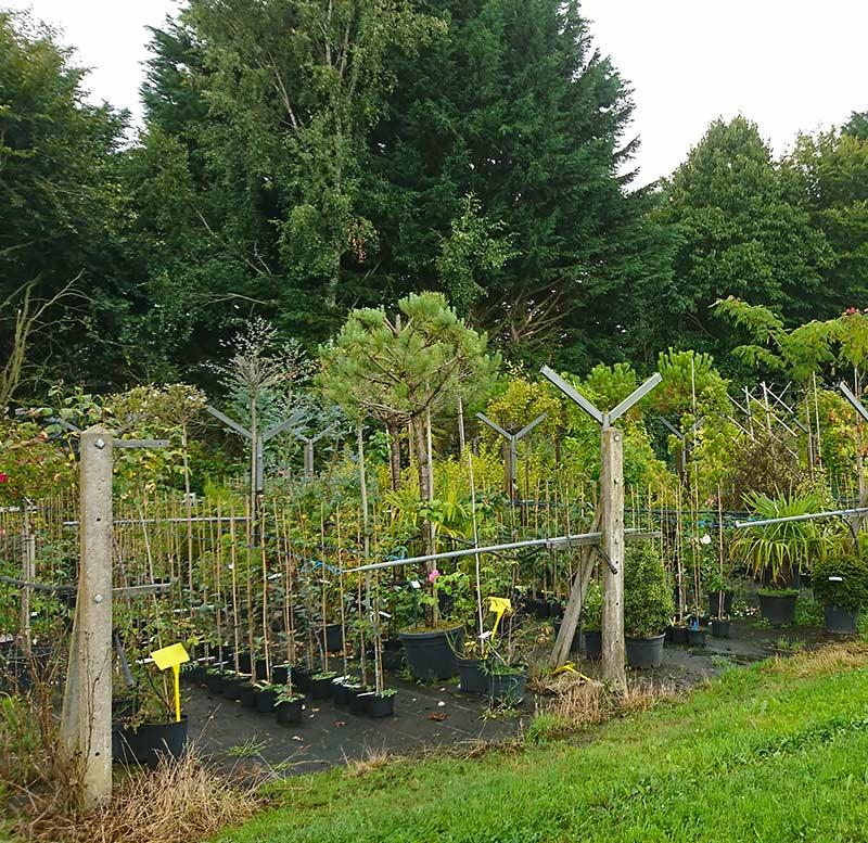 plantes vivaces de jardin à Plélo  Pépinières Corbel et Paysages